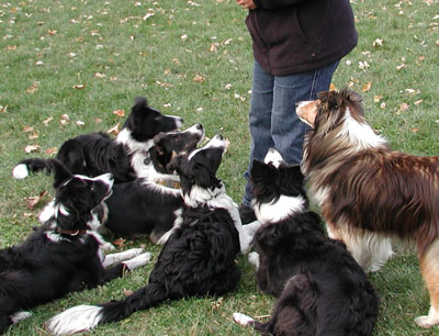 Kathy's dogs looking up at her attentively