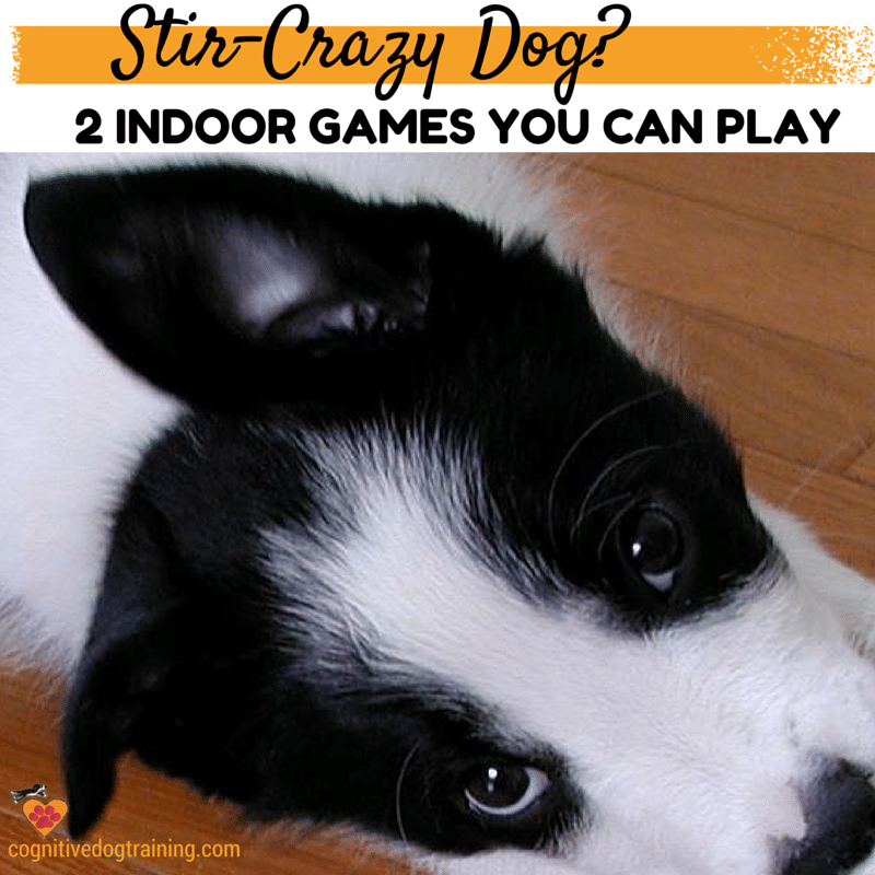 2 Indoor games you can play when you're stuck inside with your dog