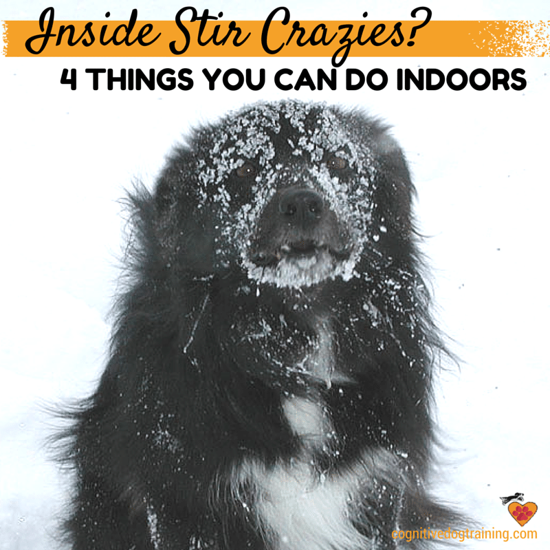 Stuck inside with your dog? 4 things you can do right now!