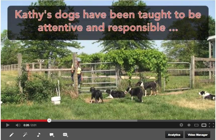 The Foundation Formula - Kathy Kawalec's Dogs