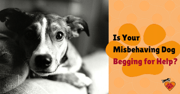 Is Your Misbehaving Dog BEGGING 600px