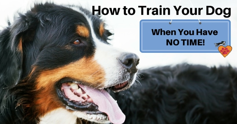 How to Train Your Dog when you have no time 800px