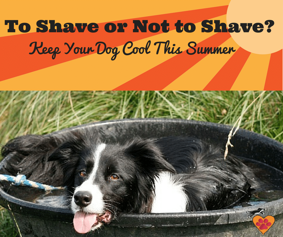 To Shave or Not to Shave-