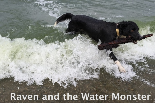 Raven and the Water Monster 600px