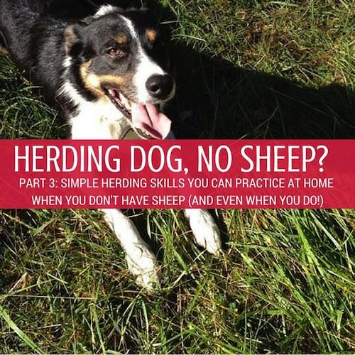 part 3 Herding Dog, No Sheep sm