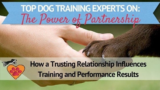 Top dog training experts blog title