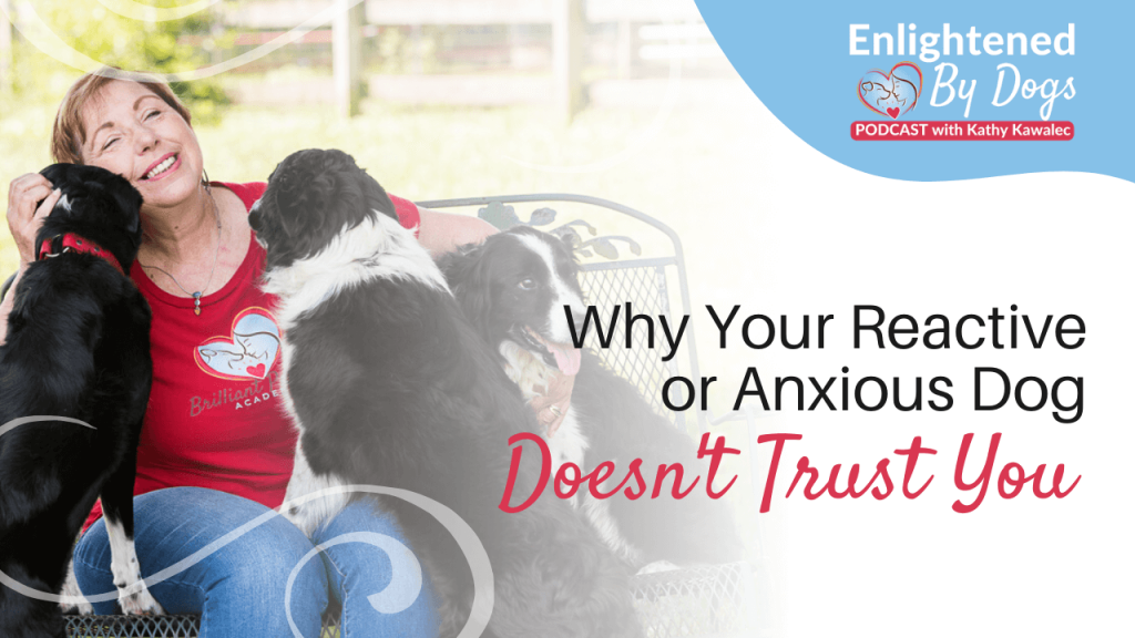 Why Your Reactive or Anxious Dog Doesn't Trust You
