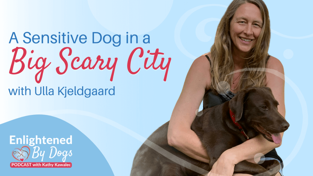 A Sensitive Dog in a Big Scary City with Ulla Kjeldgaard