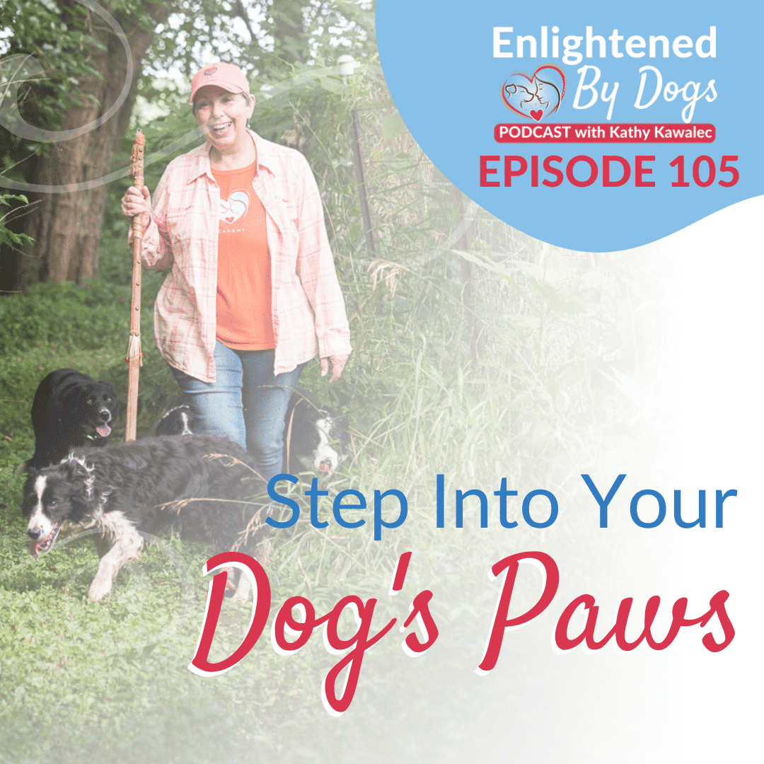 Step Into Your Dog's Paws