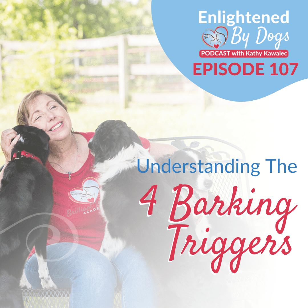 Understanding The 4 Barking Triggers