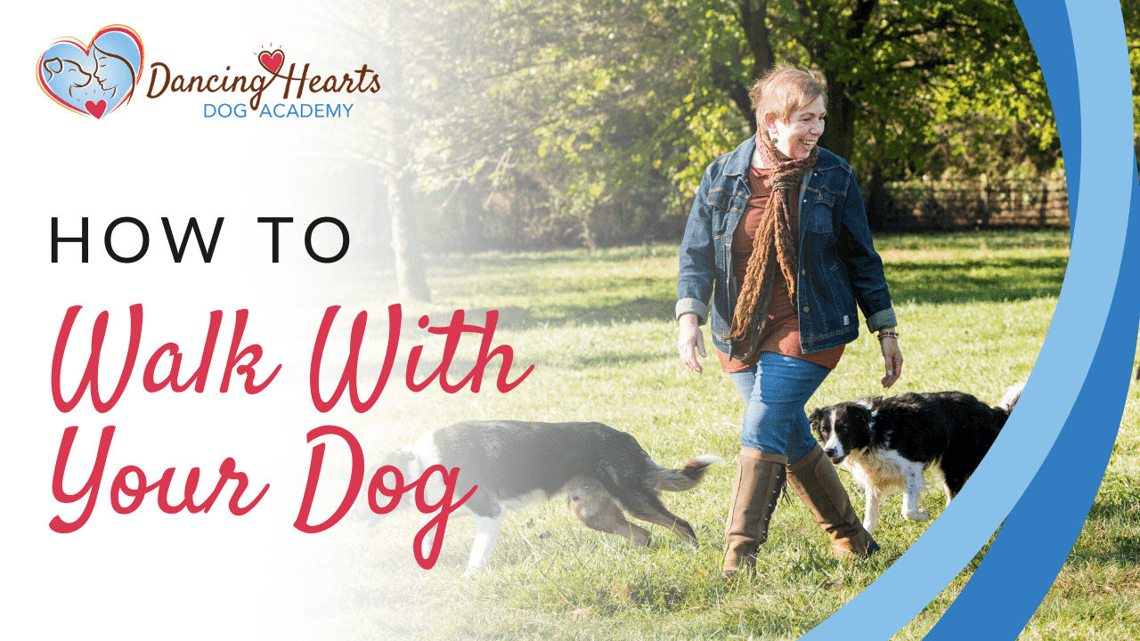 What If Walking With Your Dog Was Easy