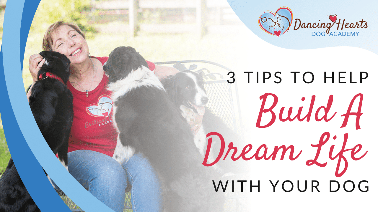 3 Tips to Help Build A Dream Life with Your Dog