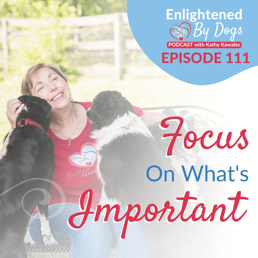 EBD111 Focus On What's Important
