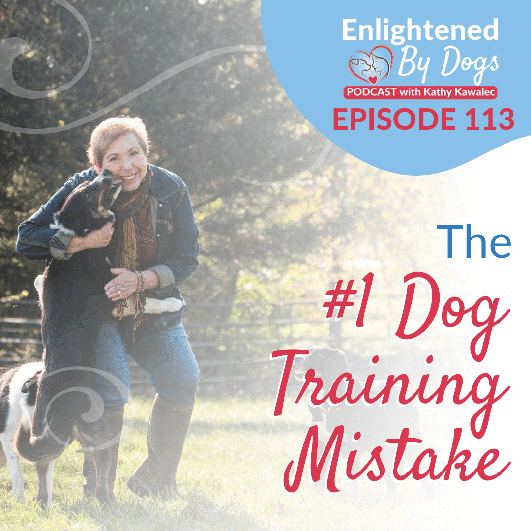 EBD113 The #1 Dog Training Mistake