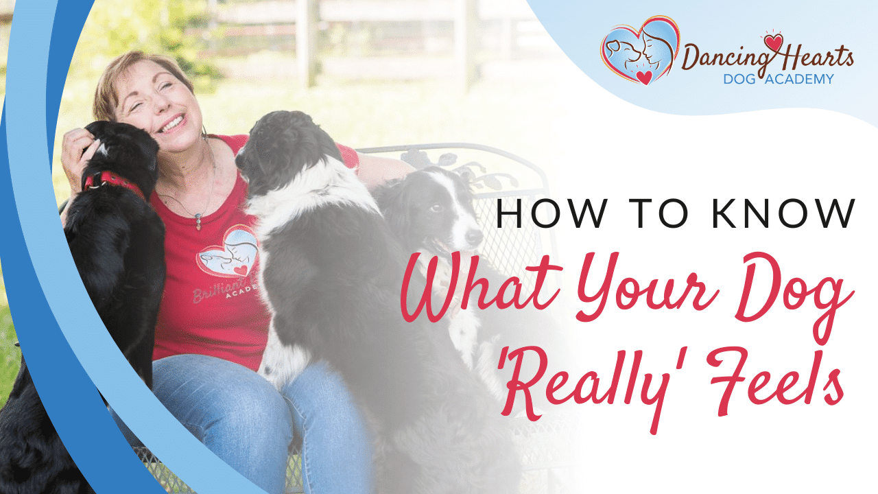 How to Know What Your Dog Really Feels
