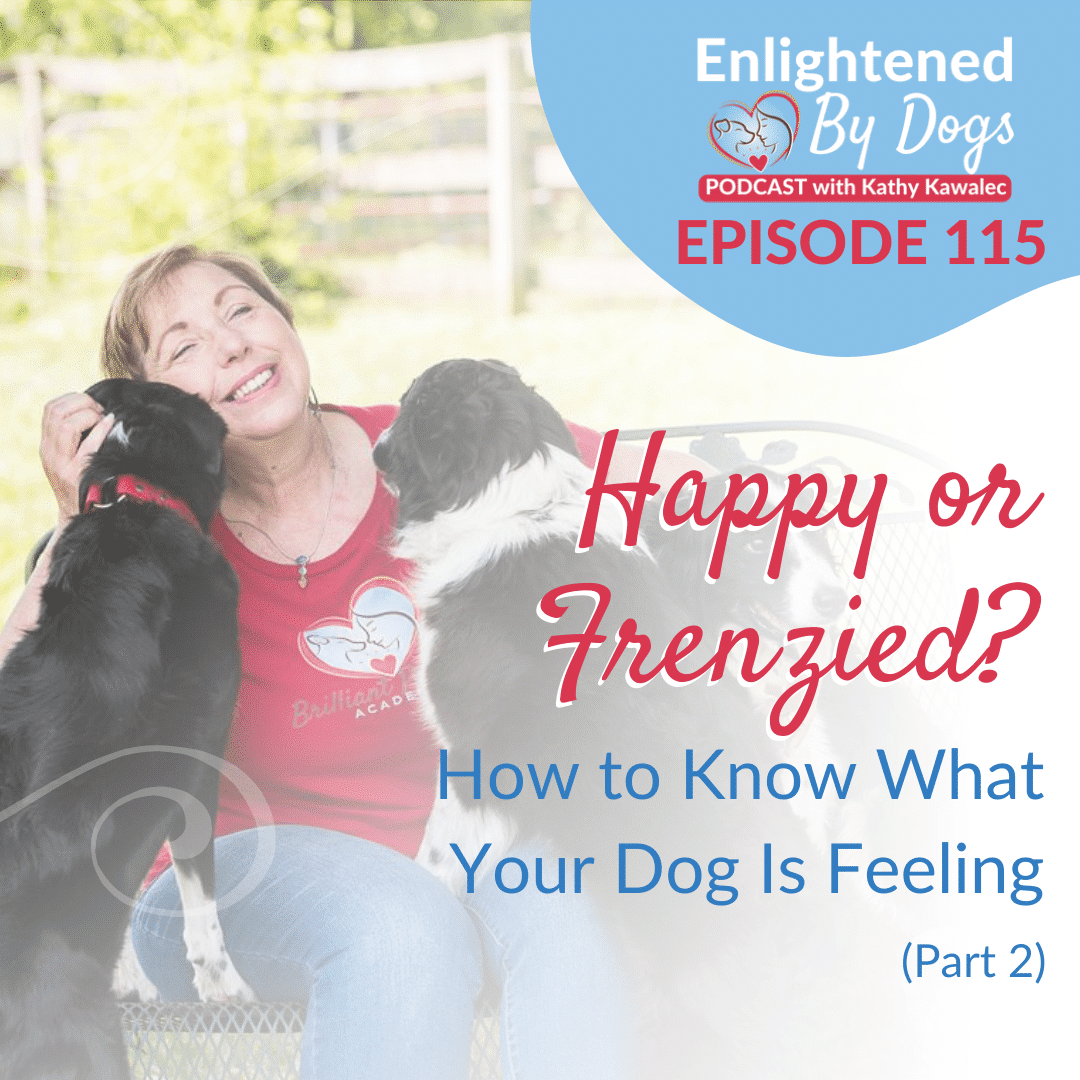 EBD115 Happy or Frenzied? How to Know What Your Dog Is Feeling (Part 2)