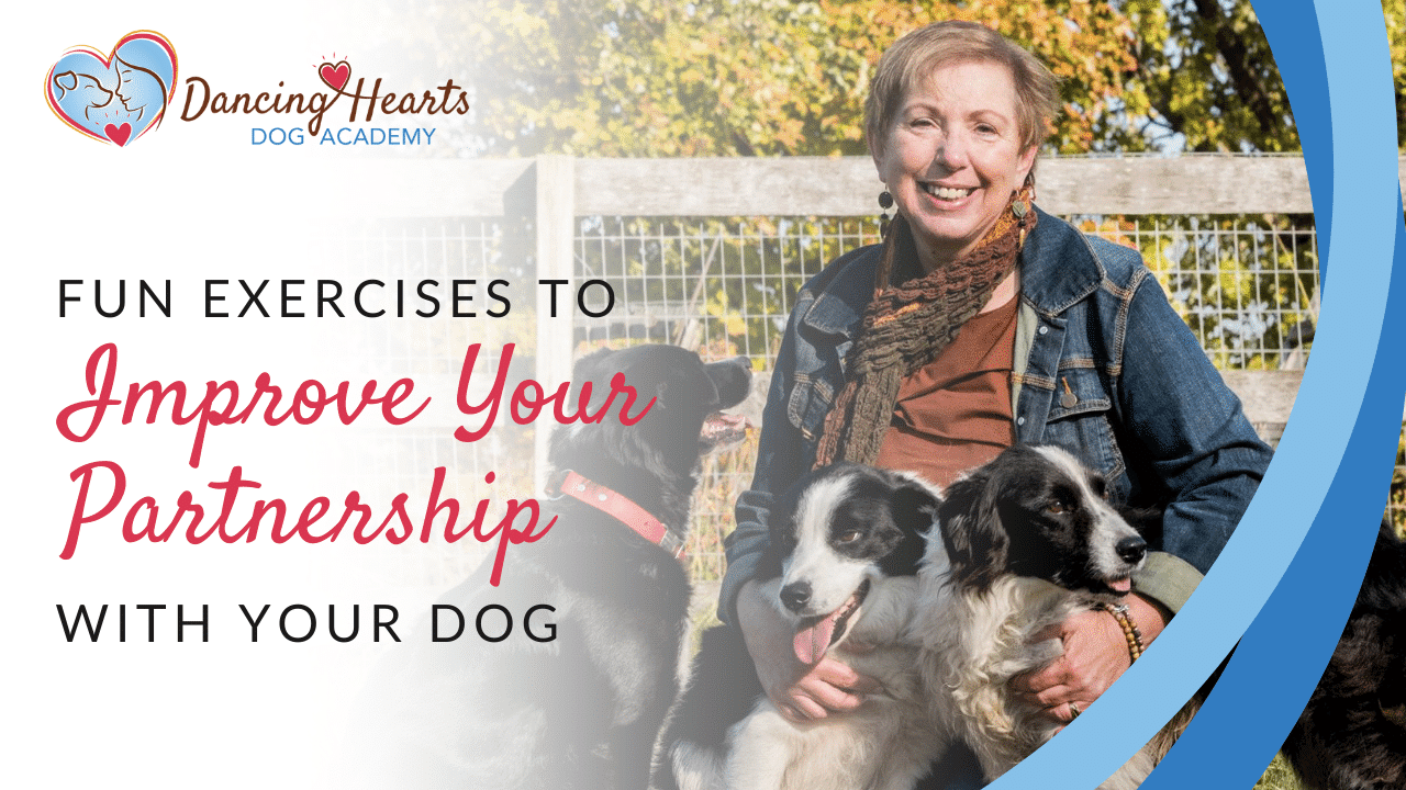 Fun Exercises to Improve Your Partnership with Your Dog