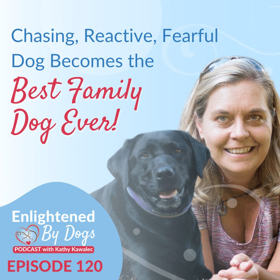 Chasing, Reactive, Fearful Dog Becomes the Best Family Dog Ever!