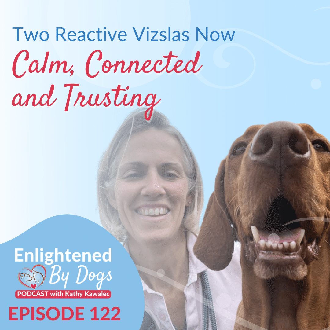 EBD122 Two Reactive Vizslas Now Calm, Connected and Trusting