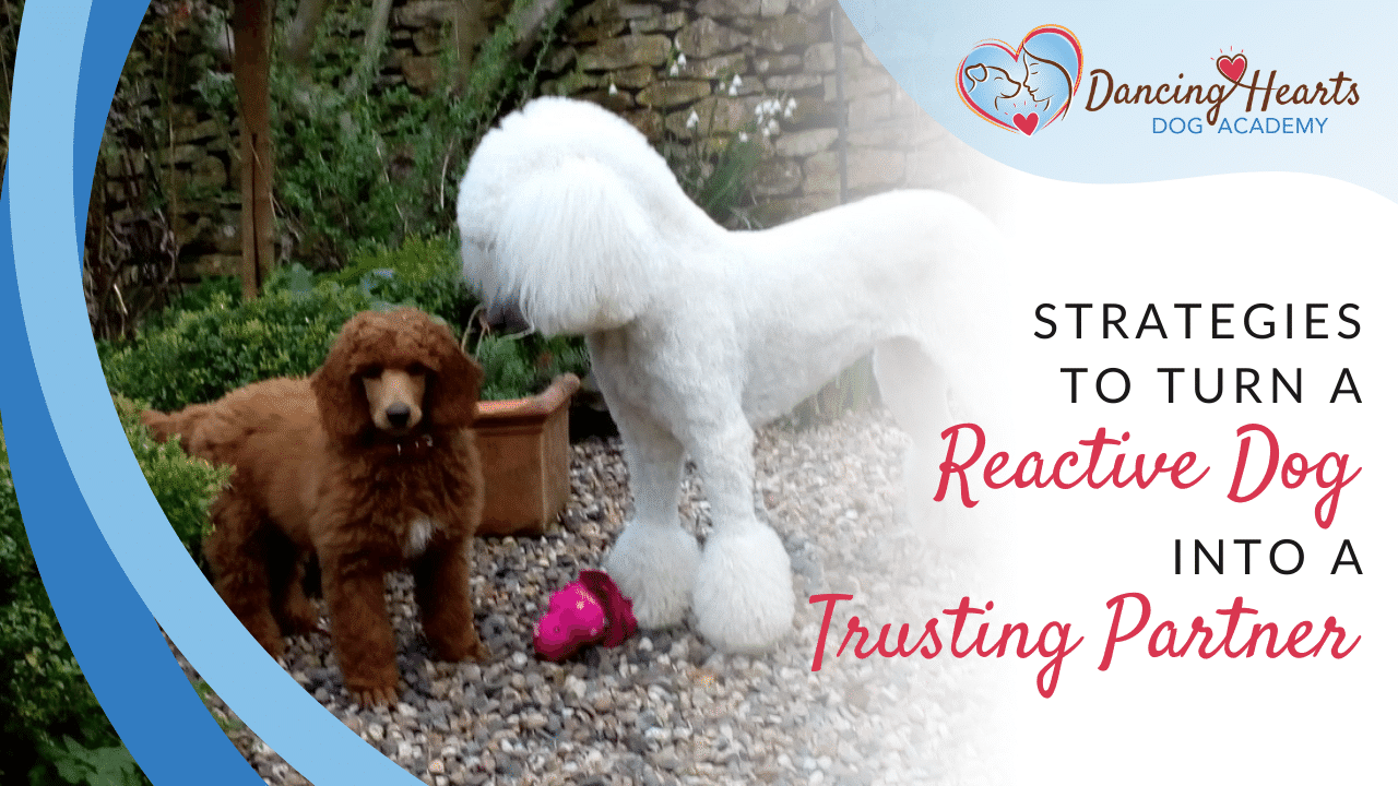 Strategies to Turn a Reactive Dog into a Trusting Partner