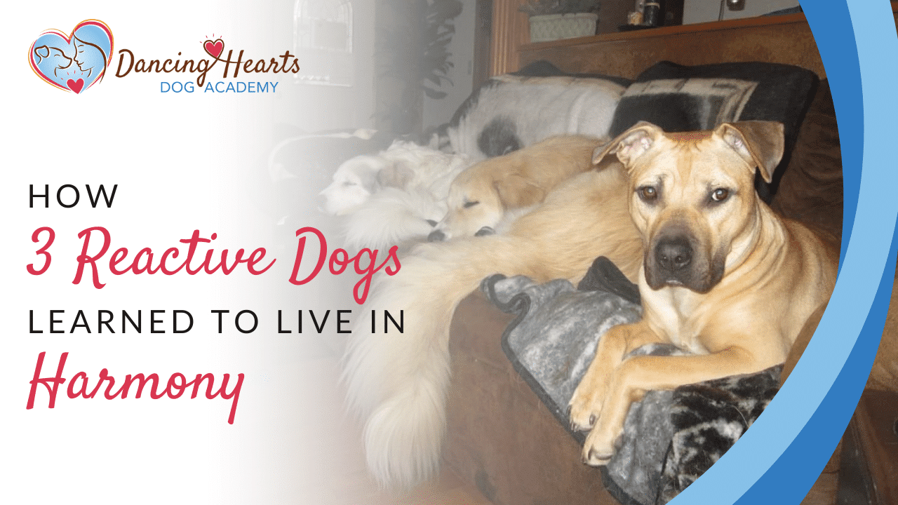 How 3 Reactive Dogs Learned to Live in Harmony