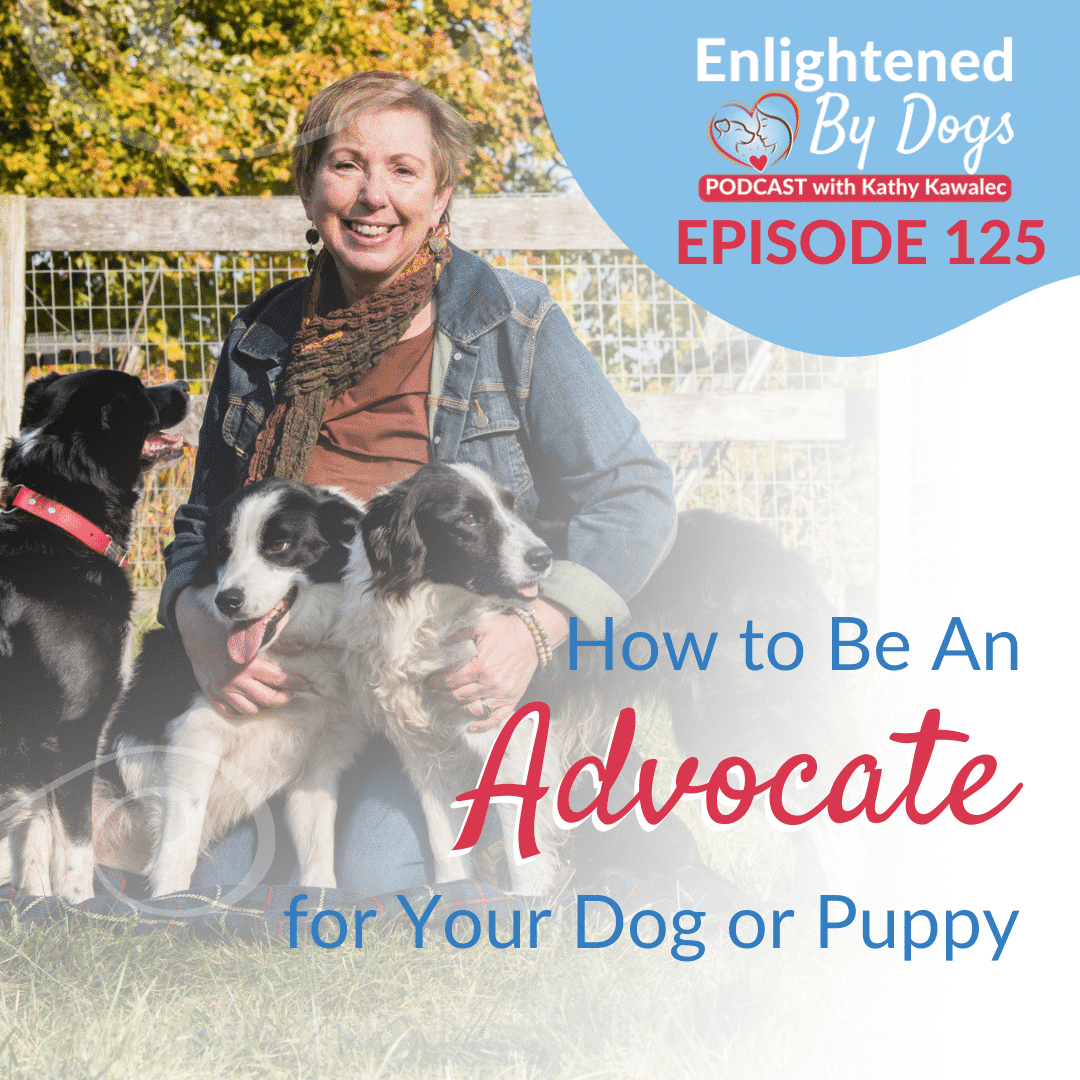 EBD125 How to Be An Advocate for Your Dog or Puppy