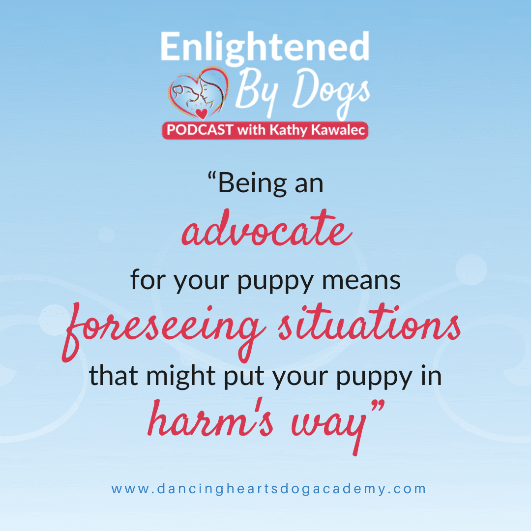 What Does it Mean to be an Advocate for Your Puppy or Young Dog?