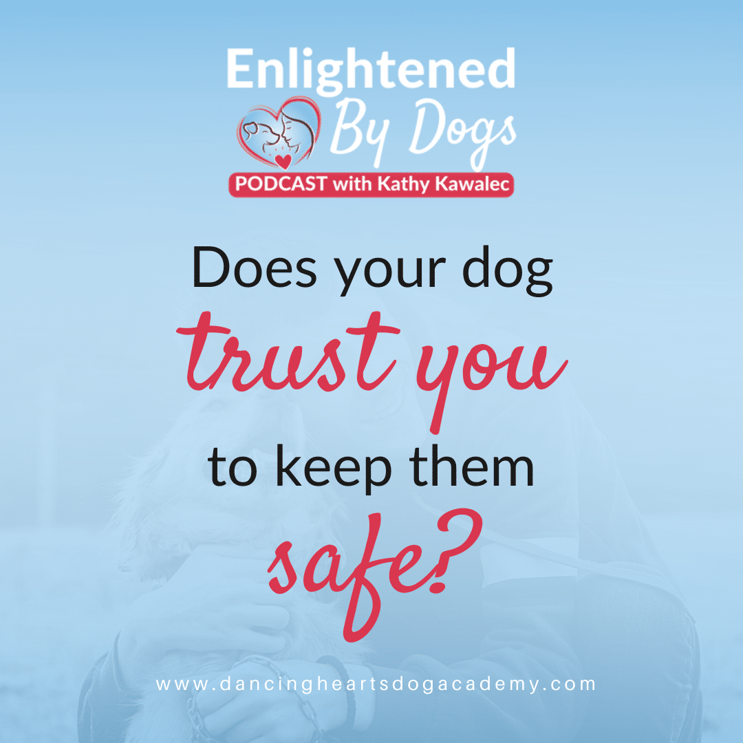 How to Build a Dog's Trust in You to Keep Them Safe