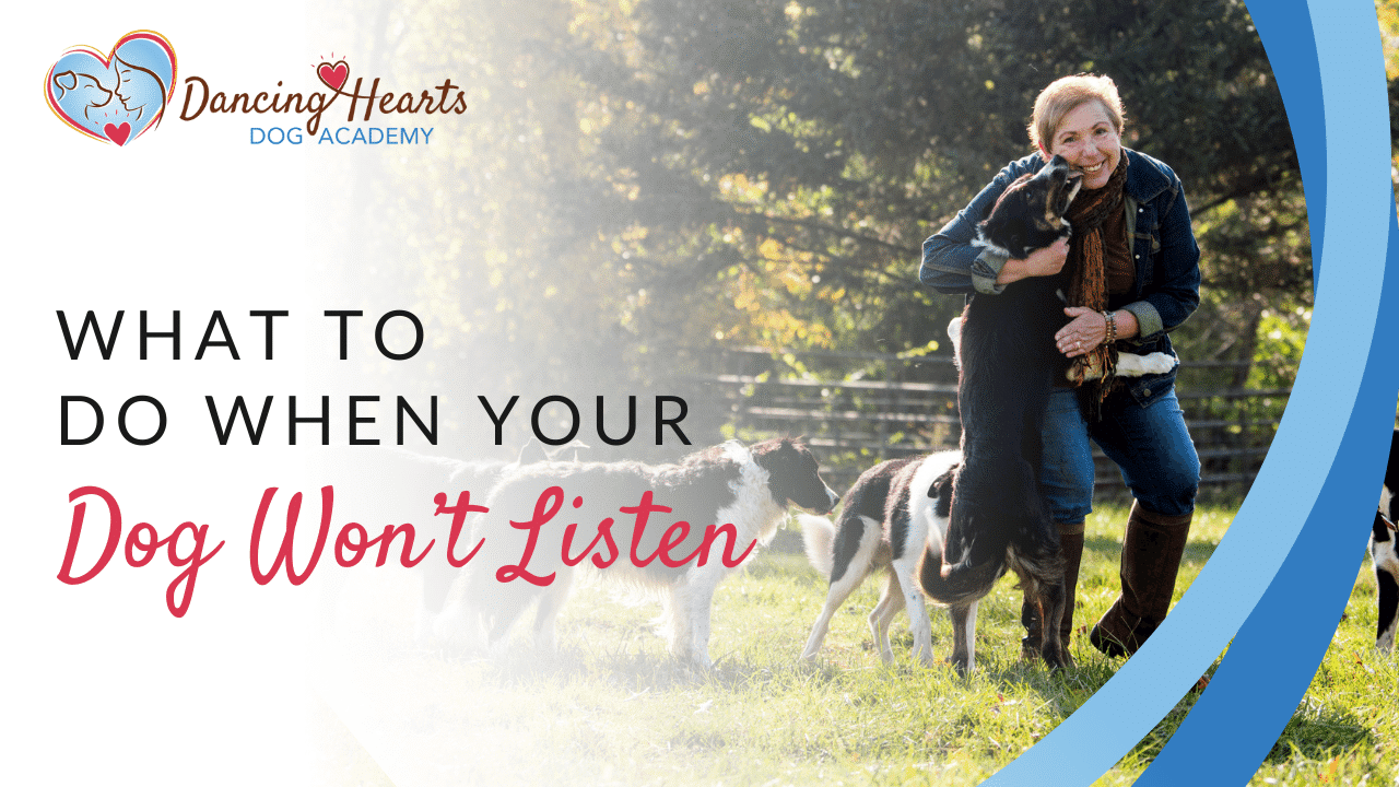 What to do When Your Dog Won't Listen