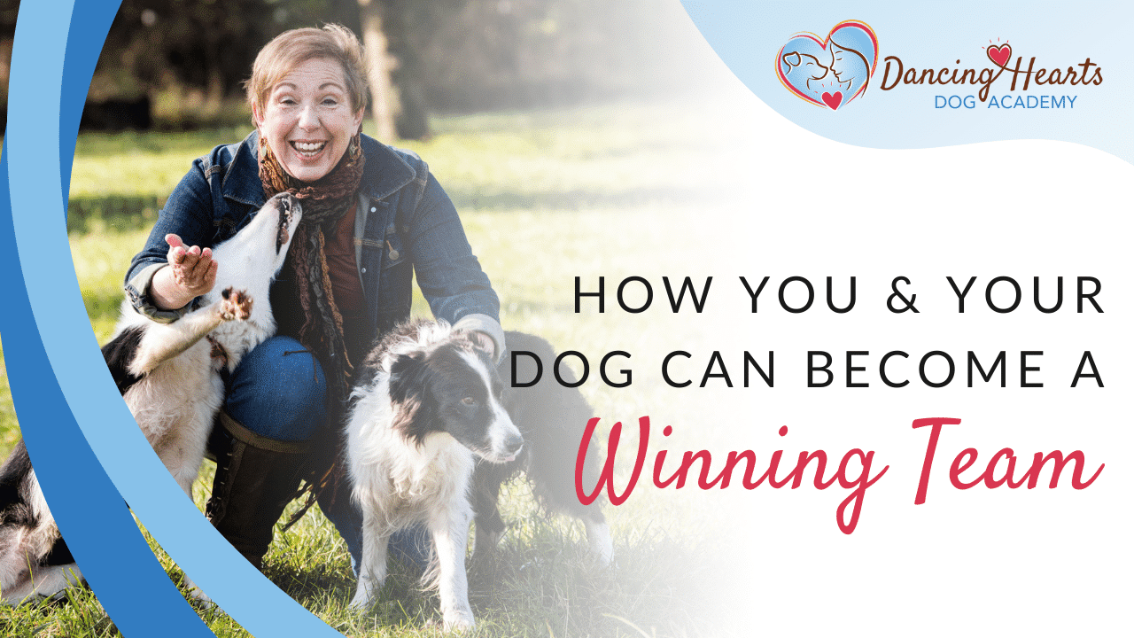 How You & Your Dog Can Become a Winning Team