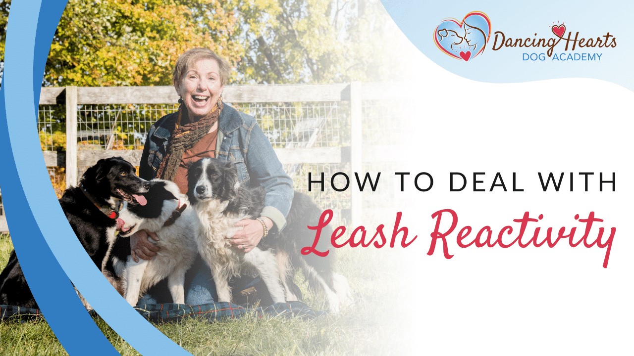 How to Deal with Leash Reactivity