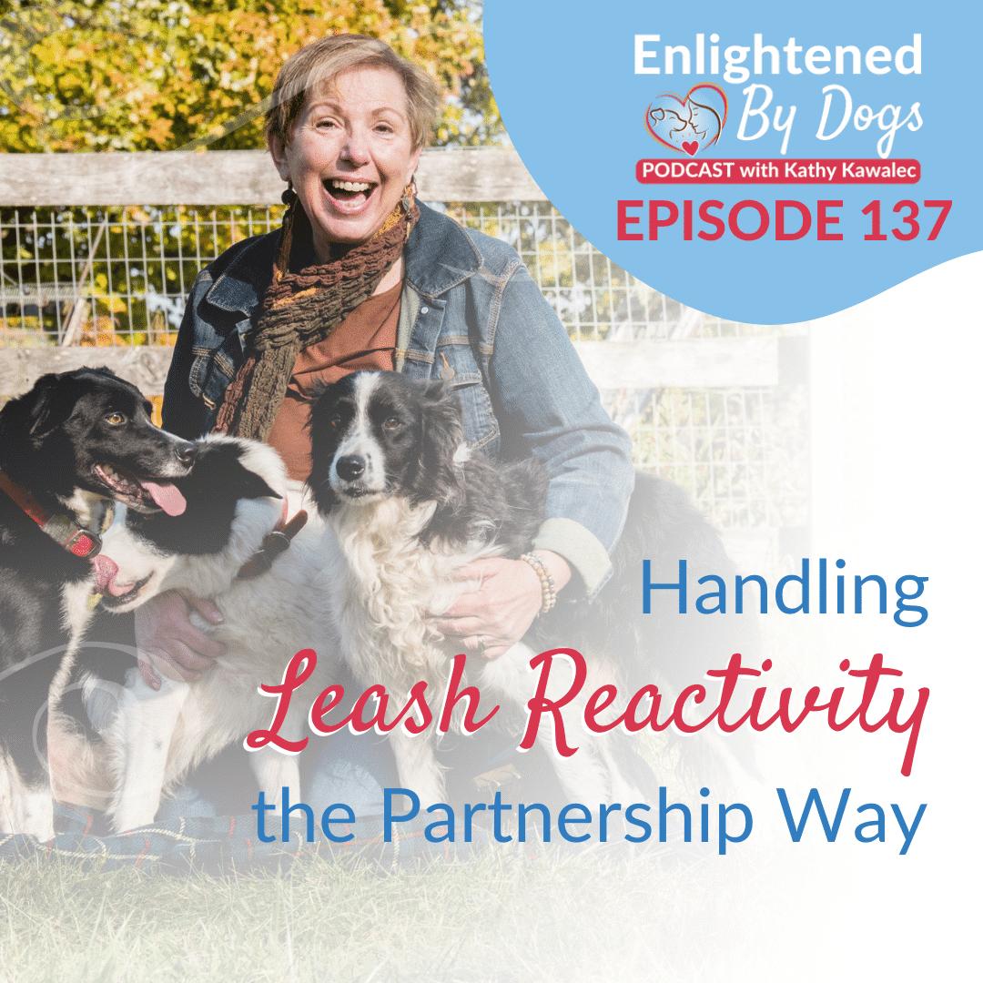 Handling Leash Reactivity the Partnership Way