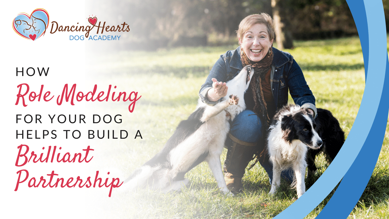 How Role Modeling for Your Dog Helps to Build a Brilliant Partnership