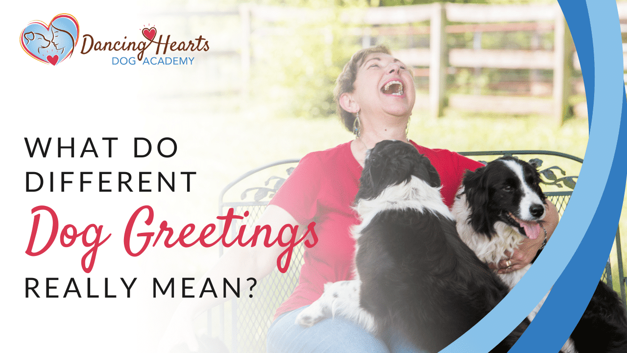 What Do Different Dog Greetings Really Mean?