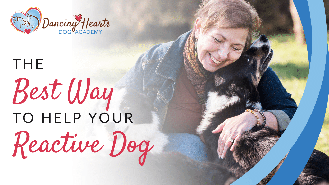 The best way to help your reactive dog