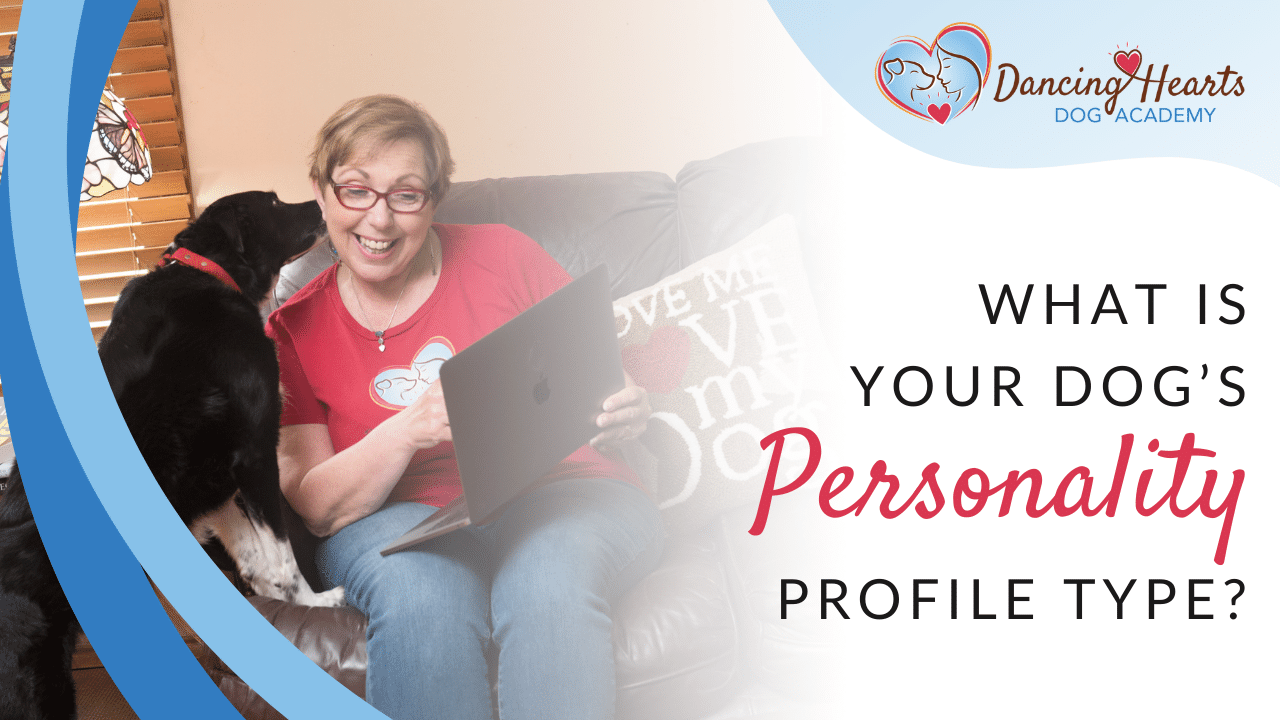 What is Your Dog's Personality Profile Type?