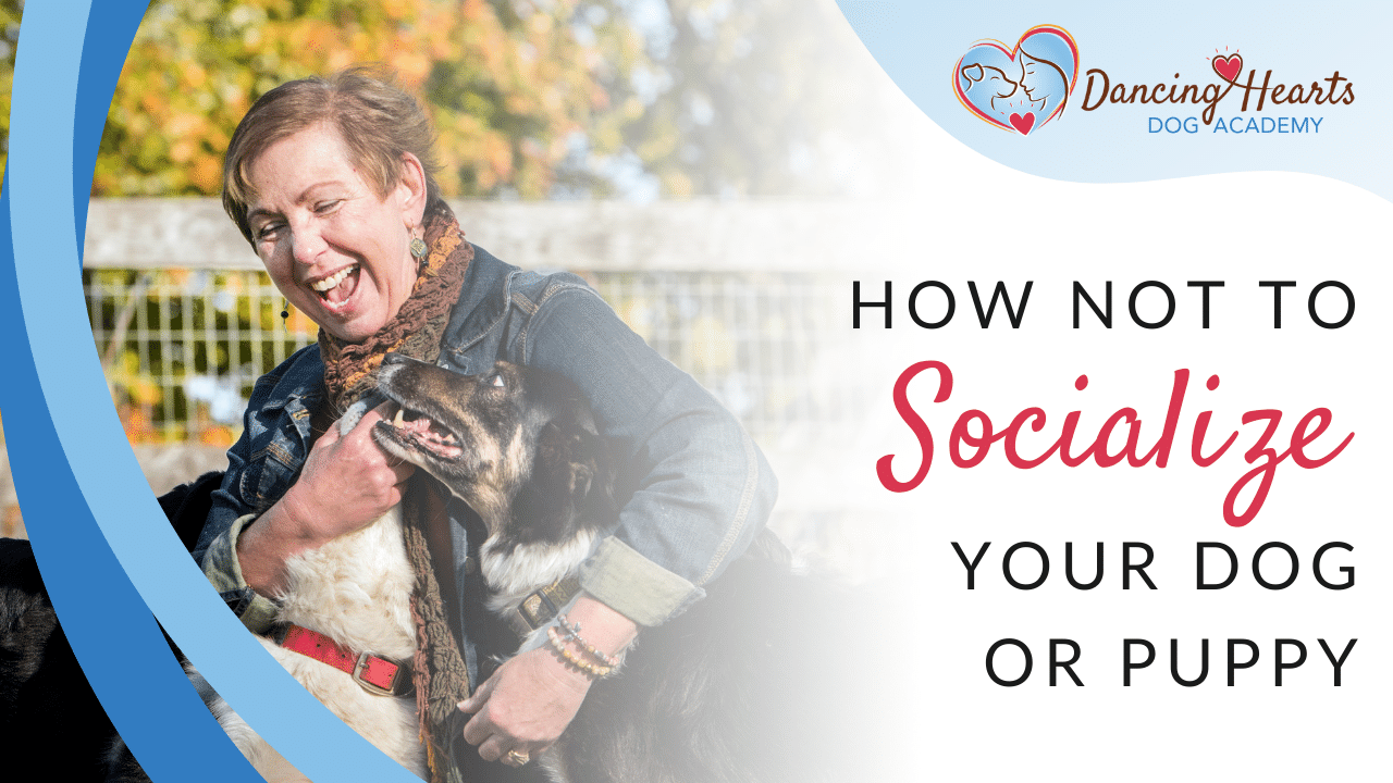 How Not to Socialize Your Dog or Puppy