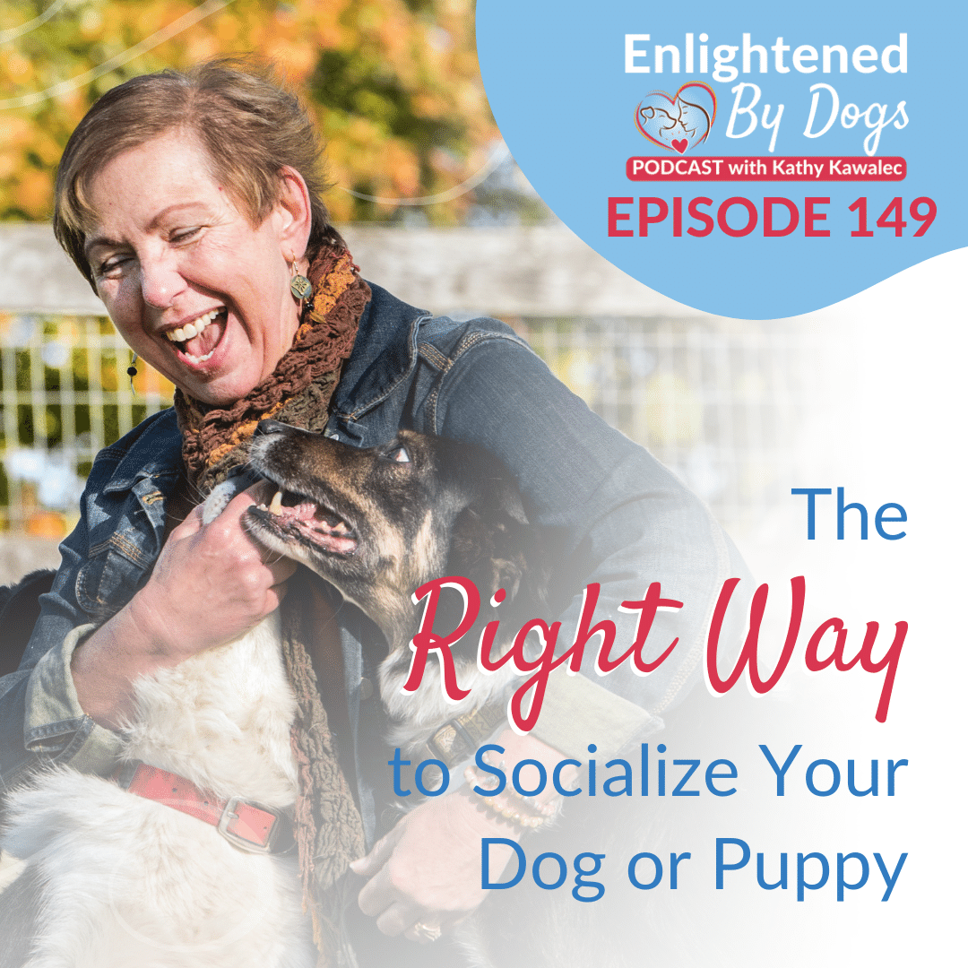 EBD149 The Right Way to Socialize Your Dog or Puppy