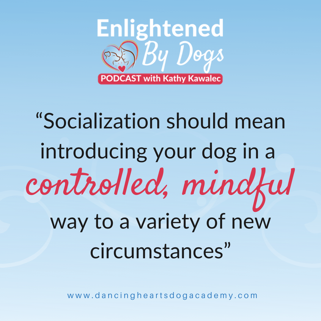 """Socialization should mean introducing your dog in a controlled, mindful way to a variety of new circumstances"""