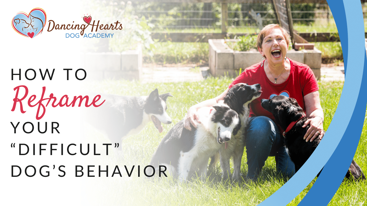 """How to reframe your """"difficult"""" dog's behavior"""