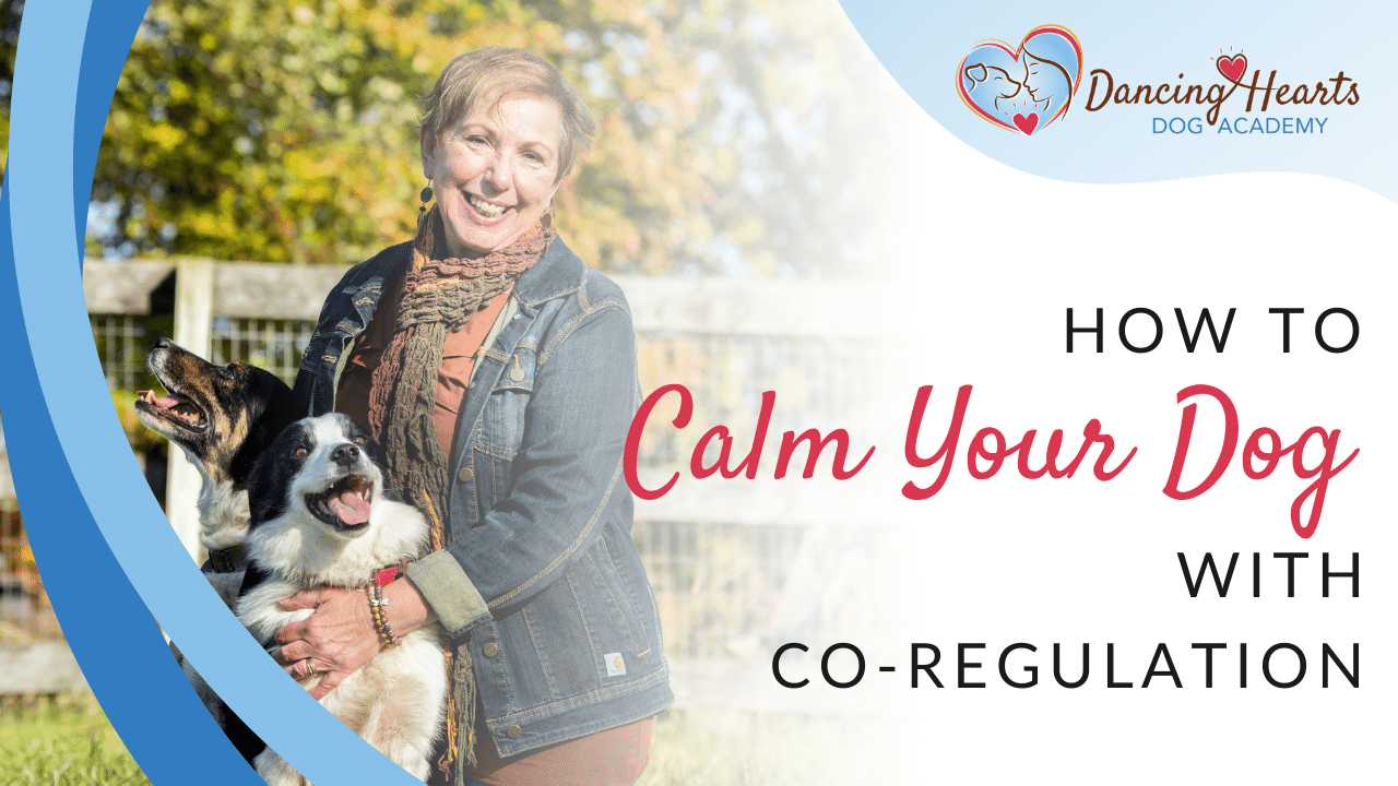 How to Calm Your Dog With Co-Regulation