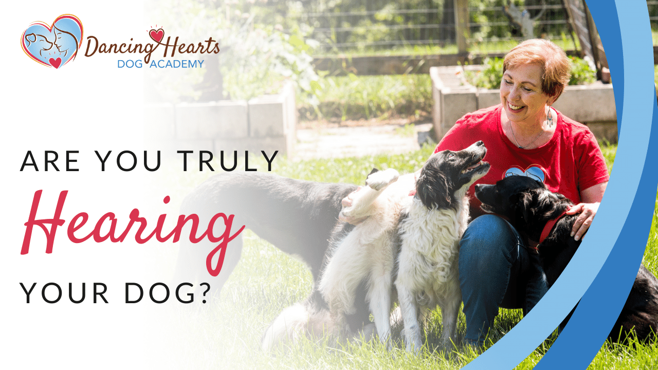 Are you truly hearing your dog?