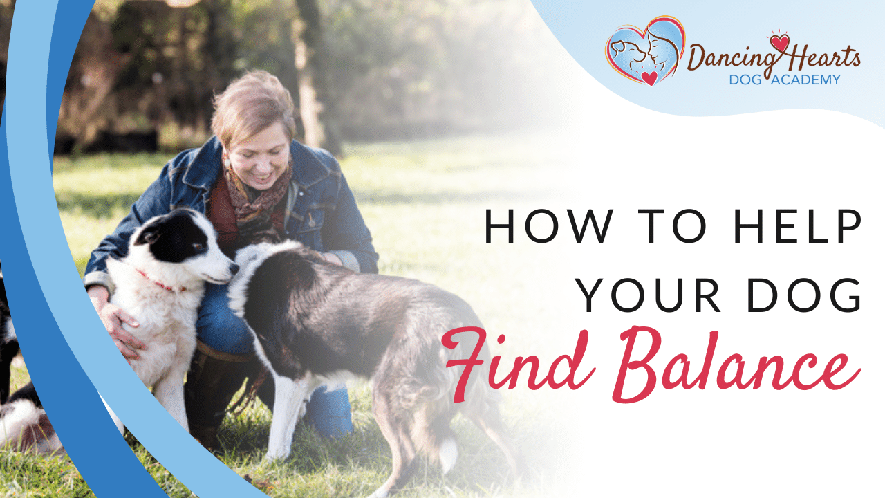 How to Help Your Dog Find Balance