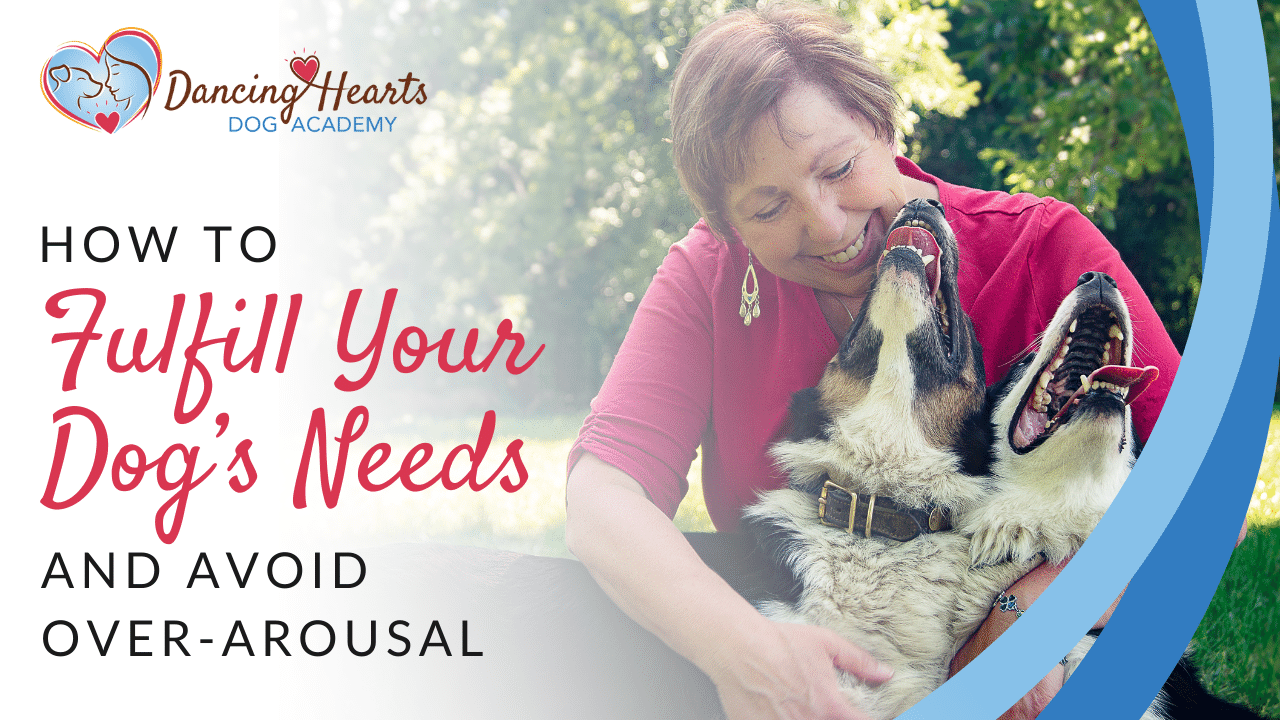 How to Fulfill Your Dog's Needs and Avoid Over-Arousal