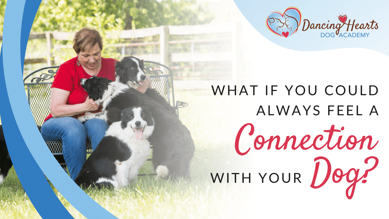 What If You Could Always Feel a Connection with Your Dog?