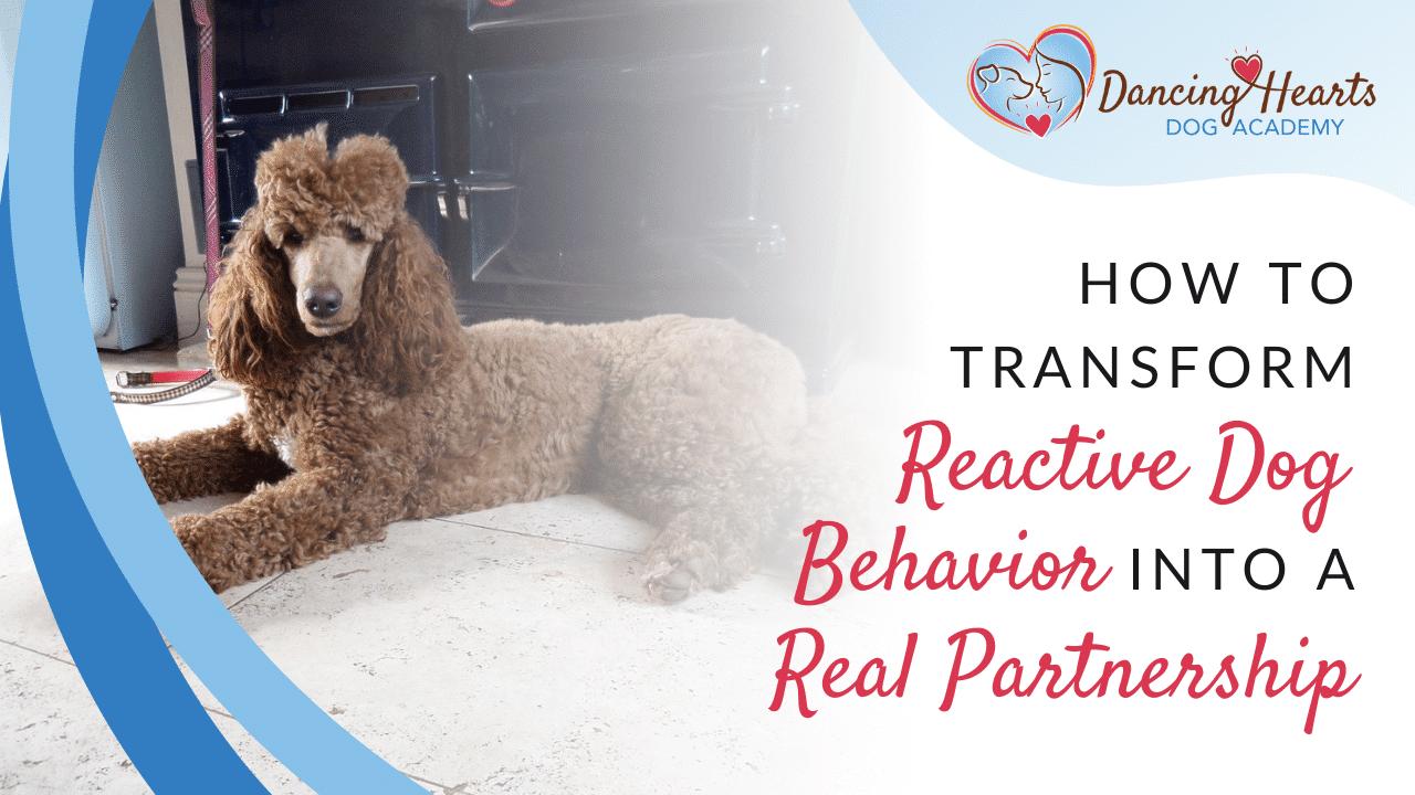 How to Transform Reactive Dog Behavior into a Real Partnership