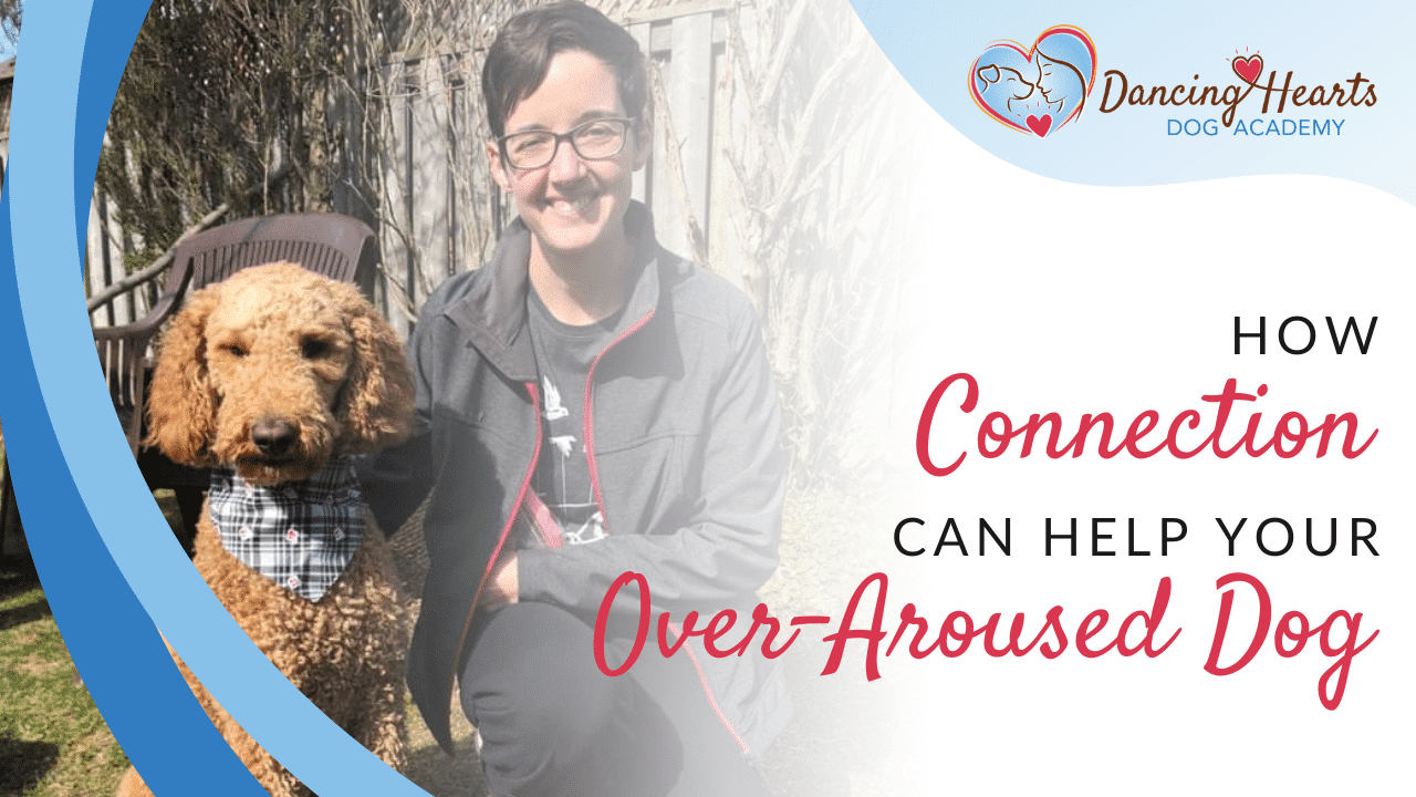 How Connection Can Help Your Over-Aroused Dog