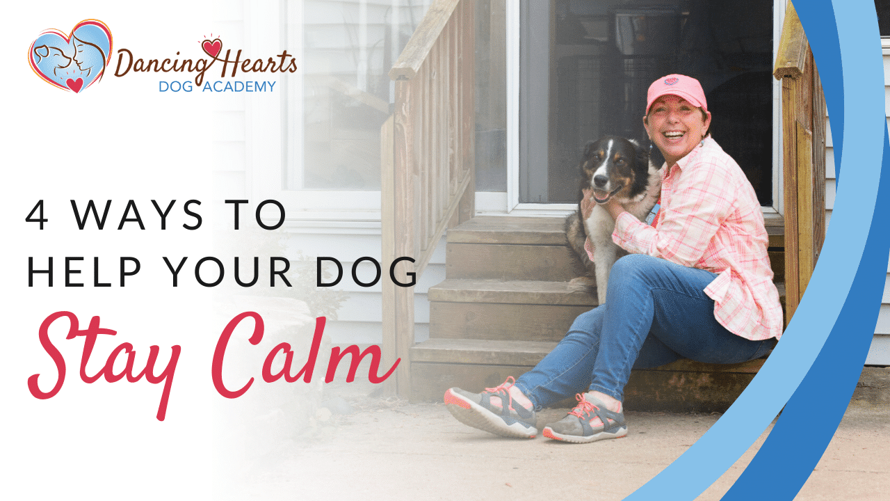 4 Ways to Help Your Dog Stay Calm