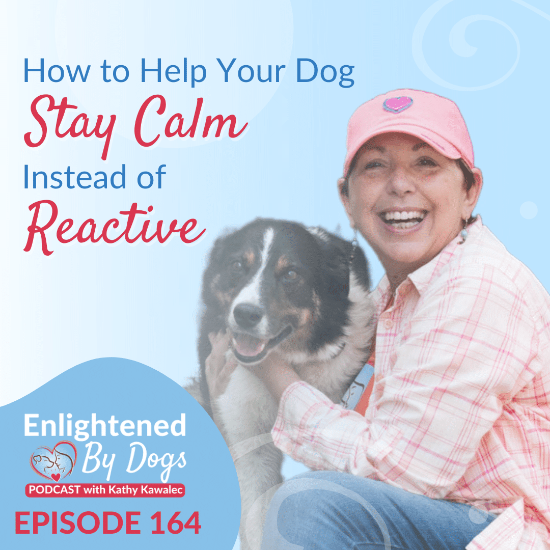 EBD164 How to Help Your Dog Stay Calm Instead of Reactive