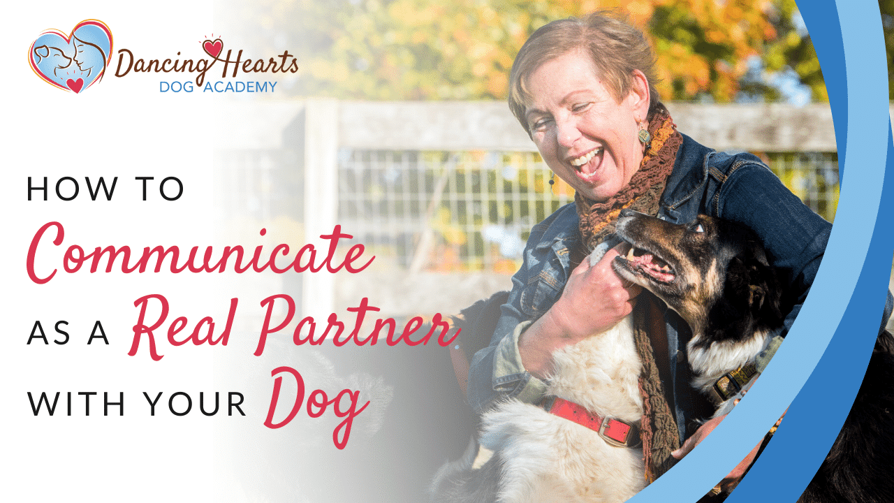 How to Communicate as a Real Partner with Your Dog
